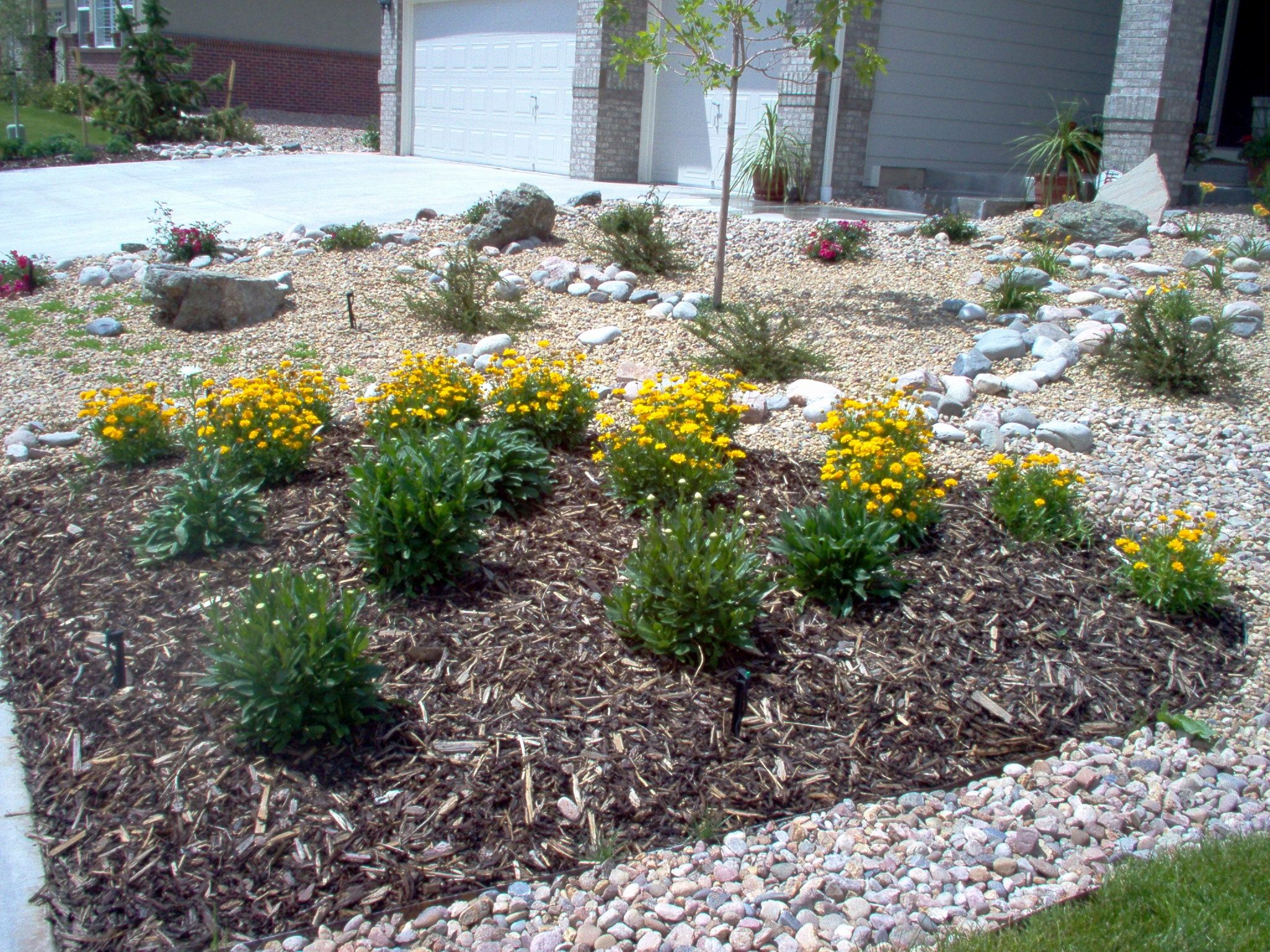 landscaping ideas ravishing xeriscape ideas front lawn ...