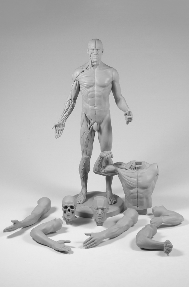 3dtotal Anatomy: Adaptable male figure   Pinterest   Male figure and ...