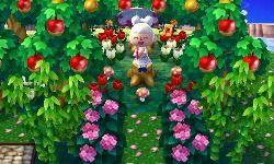 Fruchtplantage☆