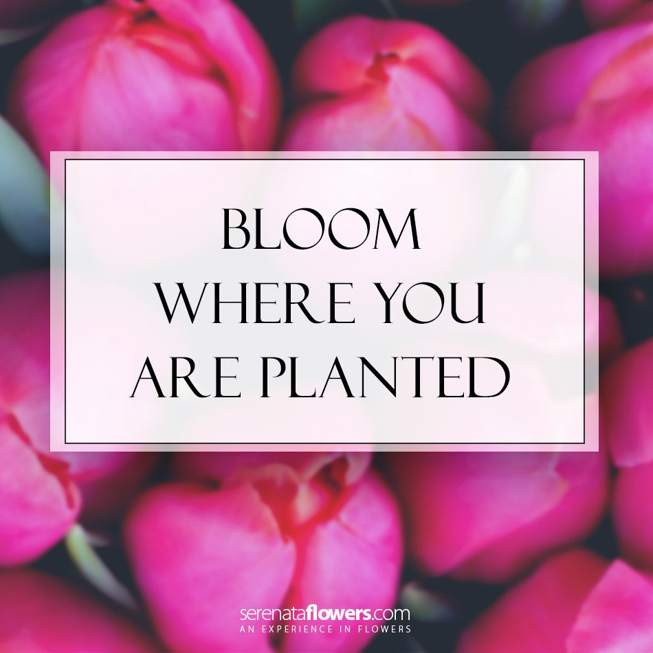 Bloom Quotes Bloom Quote  I N S P I R E  Pinterest  Encouragement