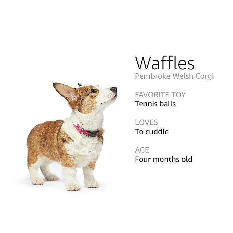 Meet The Dogs Of Amazon Corgi Dog Names Dogs