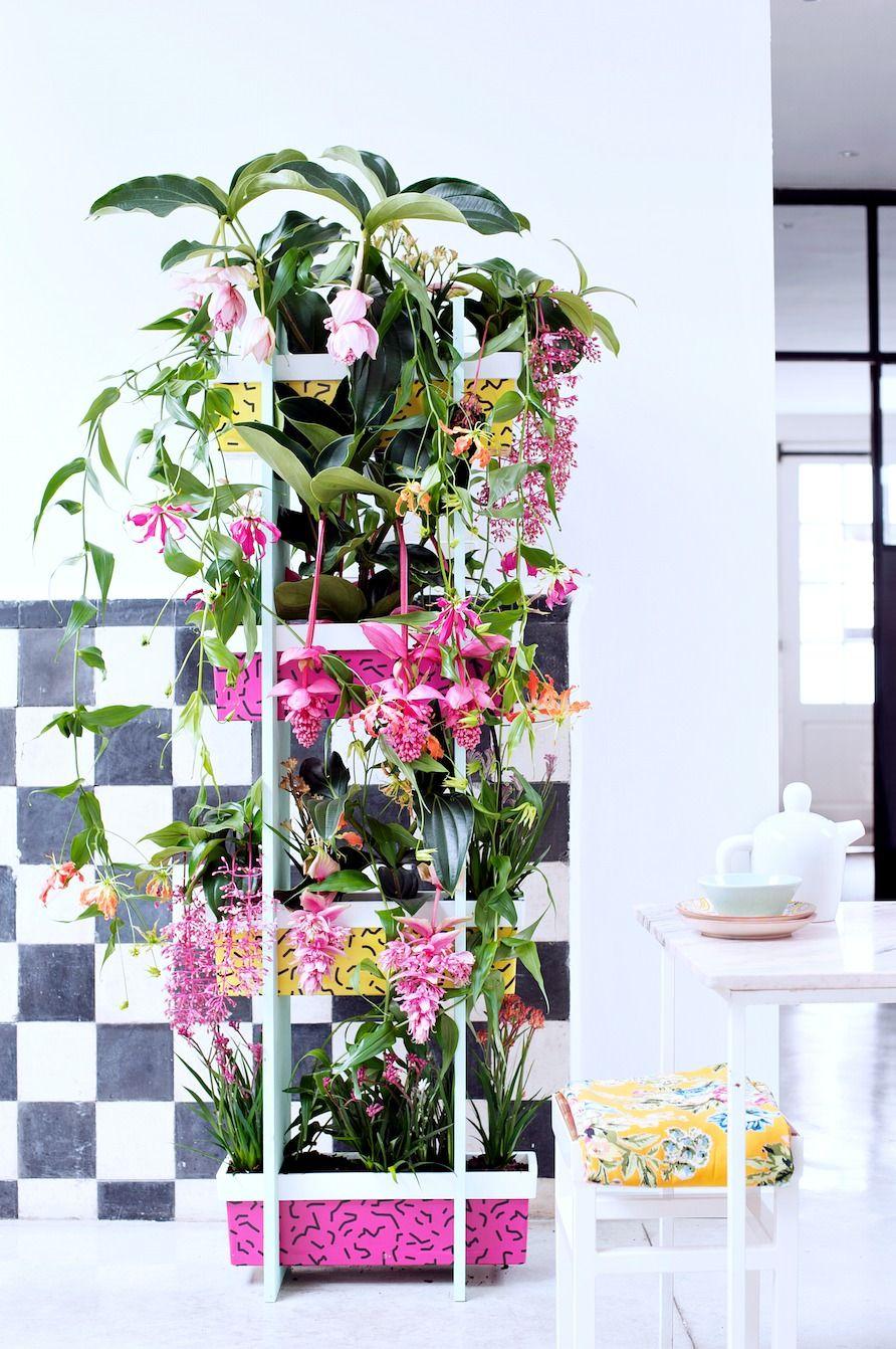 Tropical plants and a diy plant shelf plant shelves tropical