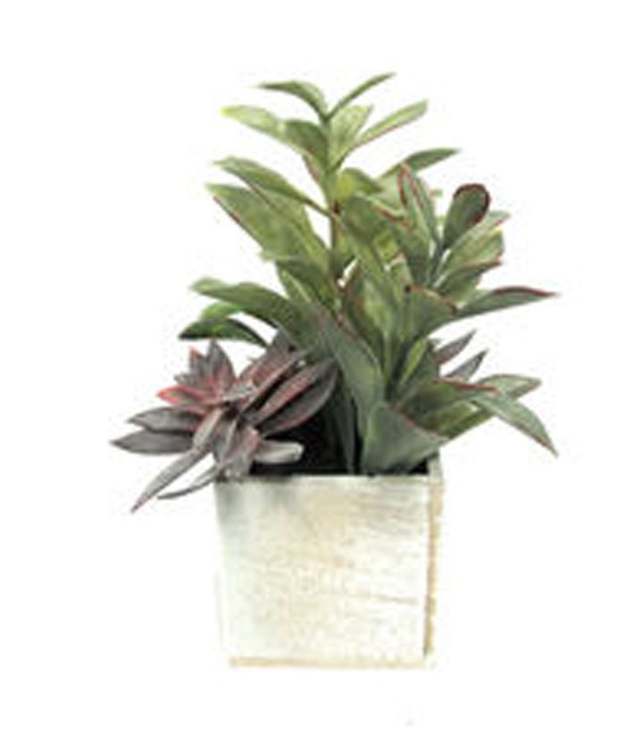 Bloom Room 8'' Succulent Mix In Square Wooden Box