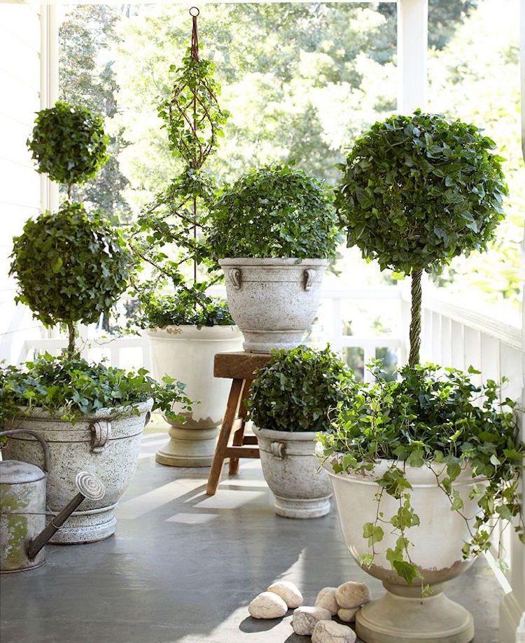 zimmerpflanzen-wenig-licht-efeu | Pflanzen | Pinterest | Landscape ...