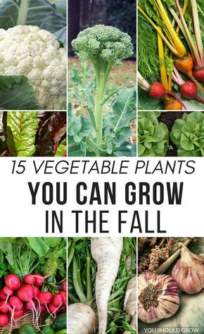What tasks should every gardener complete this fall?