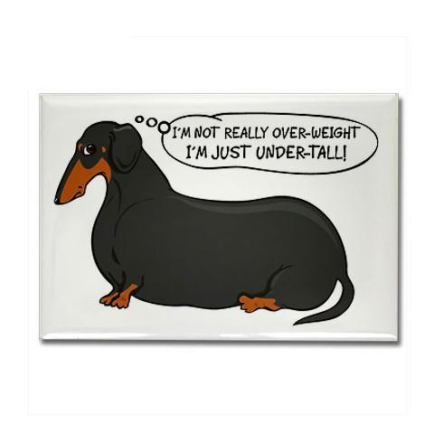Overweight Weenie Dog Weenie Dogs Dachshund Dachshund Love