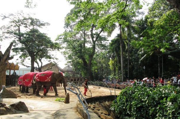 7a6bd04f04db2a07cb13912e2e7542ba - Saigon Zoo And Botanical Gardens Price