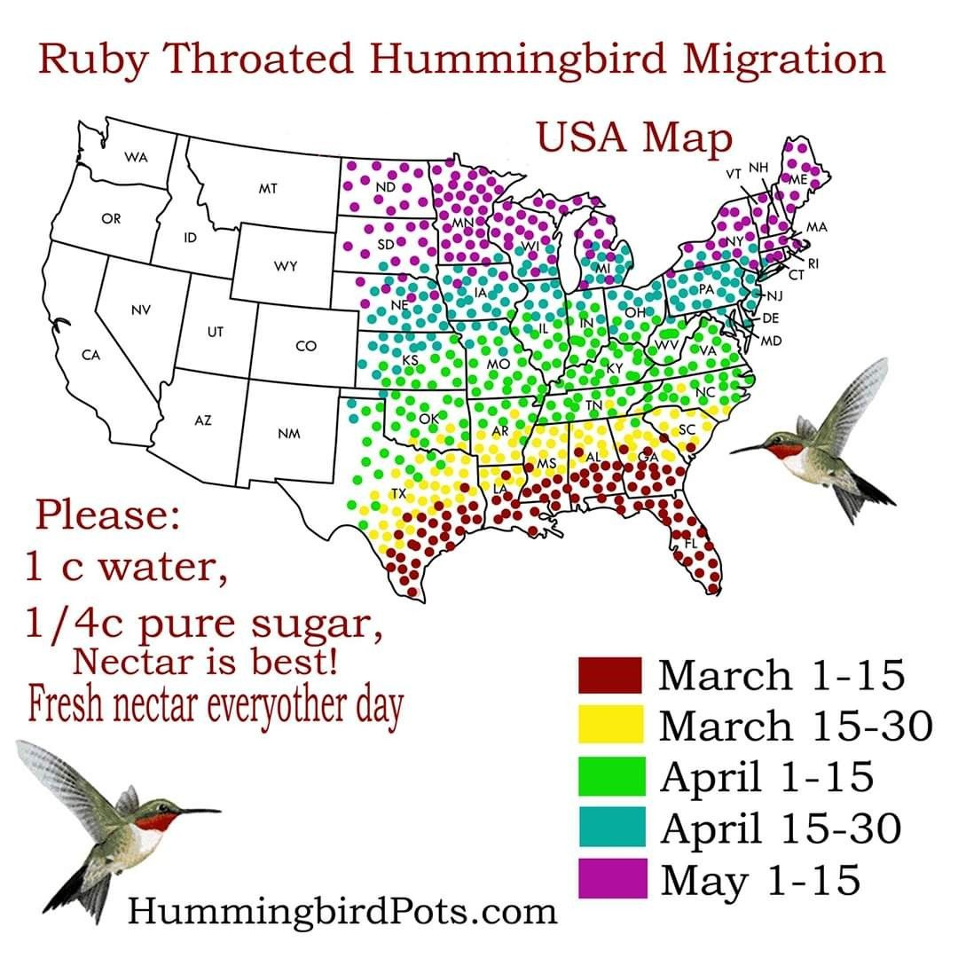 Pin by Beth Griffin on Patioleeoh in 2020 Hummingbird