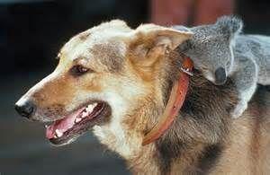 Unique Animals Friendship - Bing Images
