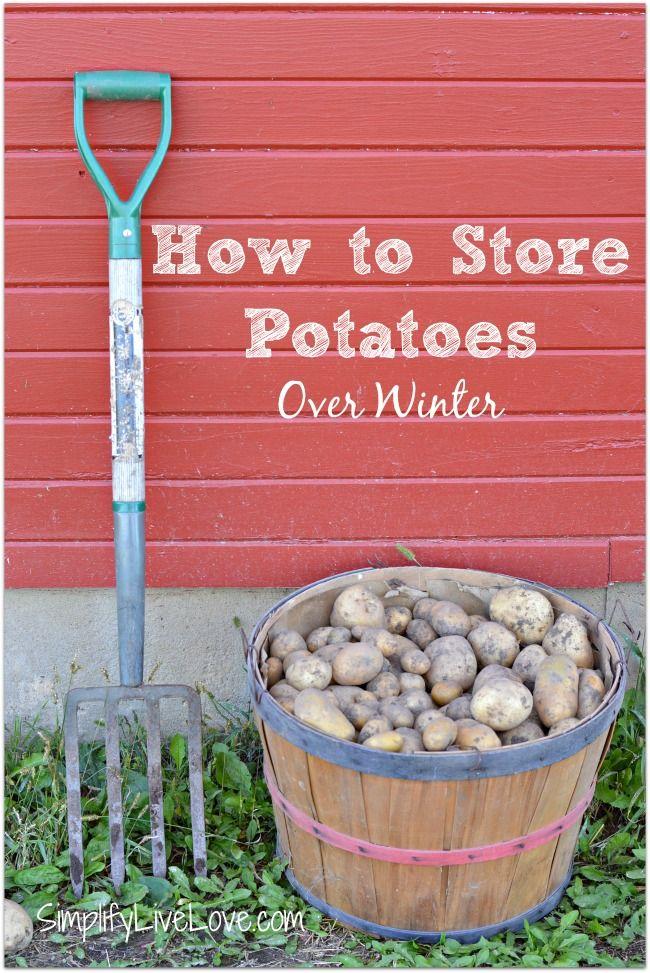 store potatoes over winter