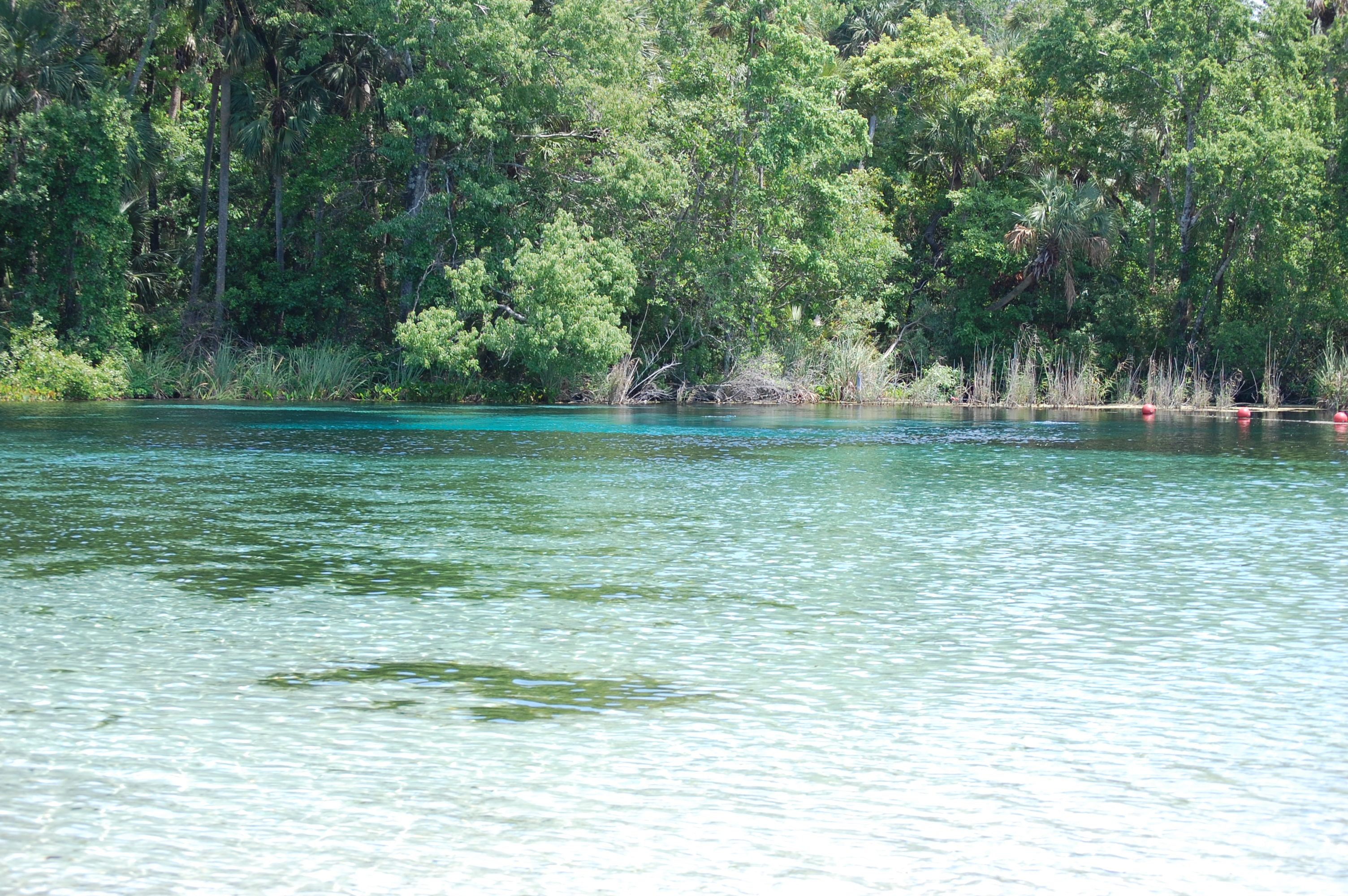 Alexander Springs, Ocala National Forest, Florida | Places to see by ...