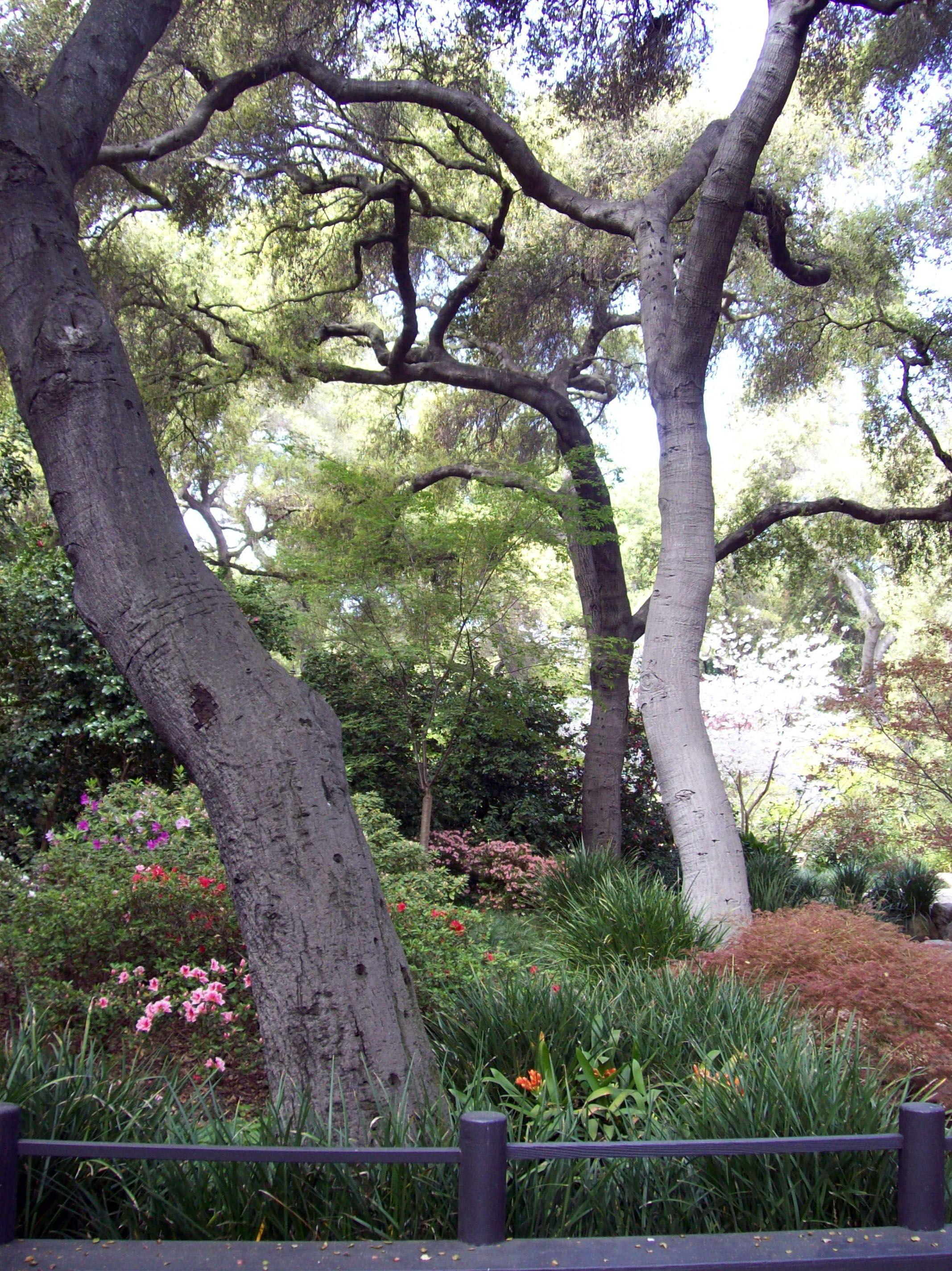 Pin by Heather Preston on Trees Tree, Plants, Garden