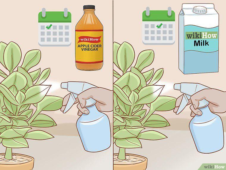7a6e0fc7e4c0eb483d50c3e15c8bb9de - How To Get Rid Of Mildew In Garden Soil