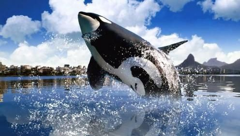 Pin On Orca Whale