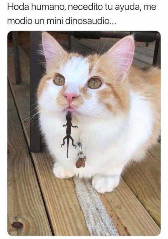 El Gato Esta En Peligro Funny Animal Images Cute Animal Memes Funny Animal Pictures