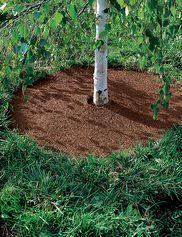 Easyflex™ No Dig Edging 50' Gardening Ideas Tree 640 x 480