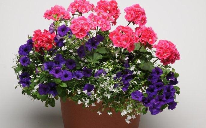 kompozycje kwiatowe na taras szukaj w google blumen pinterest g rtnern balkon und pflanzen. Black Bedroom Furniture Sets. Home Design Ideas