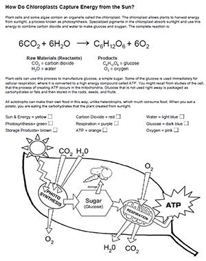 Photosynthesis Review Worksheet Answer Key Pdf - worksheet
