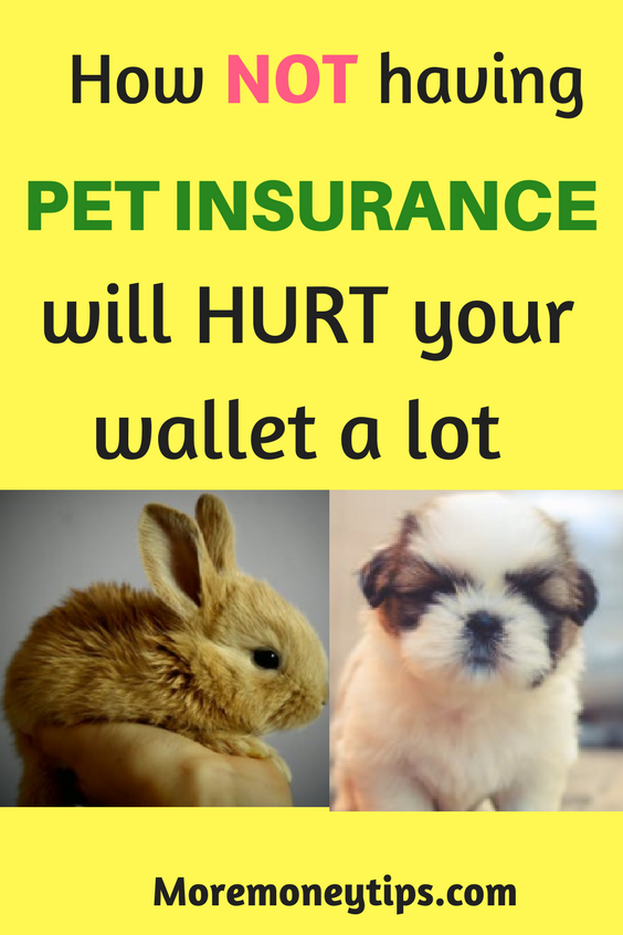 Pet Insurance Best Ways to Save Pet insurance cost