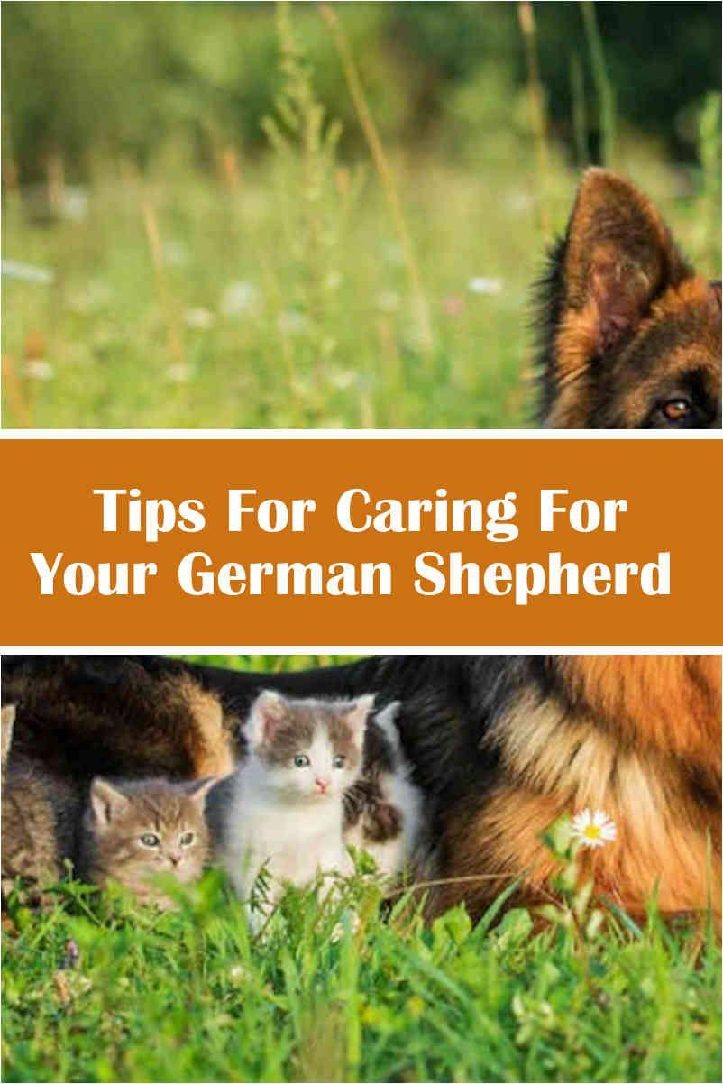Are German Shepherds Good Family Pets German Shepherd Sporting Dogs German Shepherd Puppies White