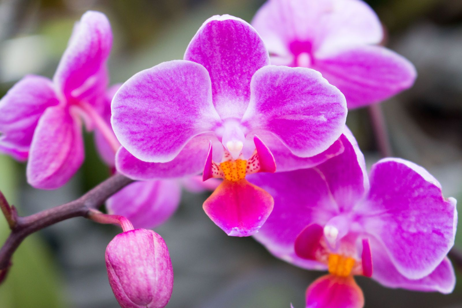 swoonworthy photos from the new york botanical garden orchid