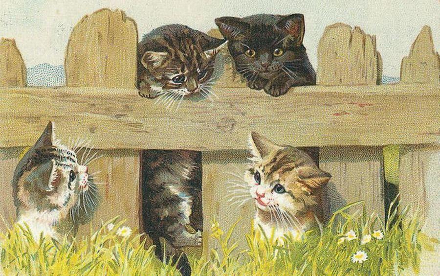 картинки для декупажа коты и кошки котята потом следователю подошел