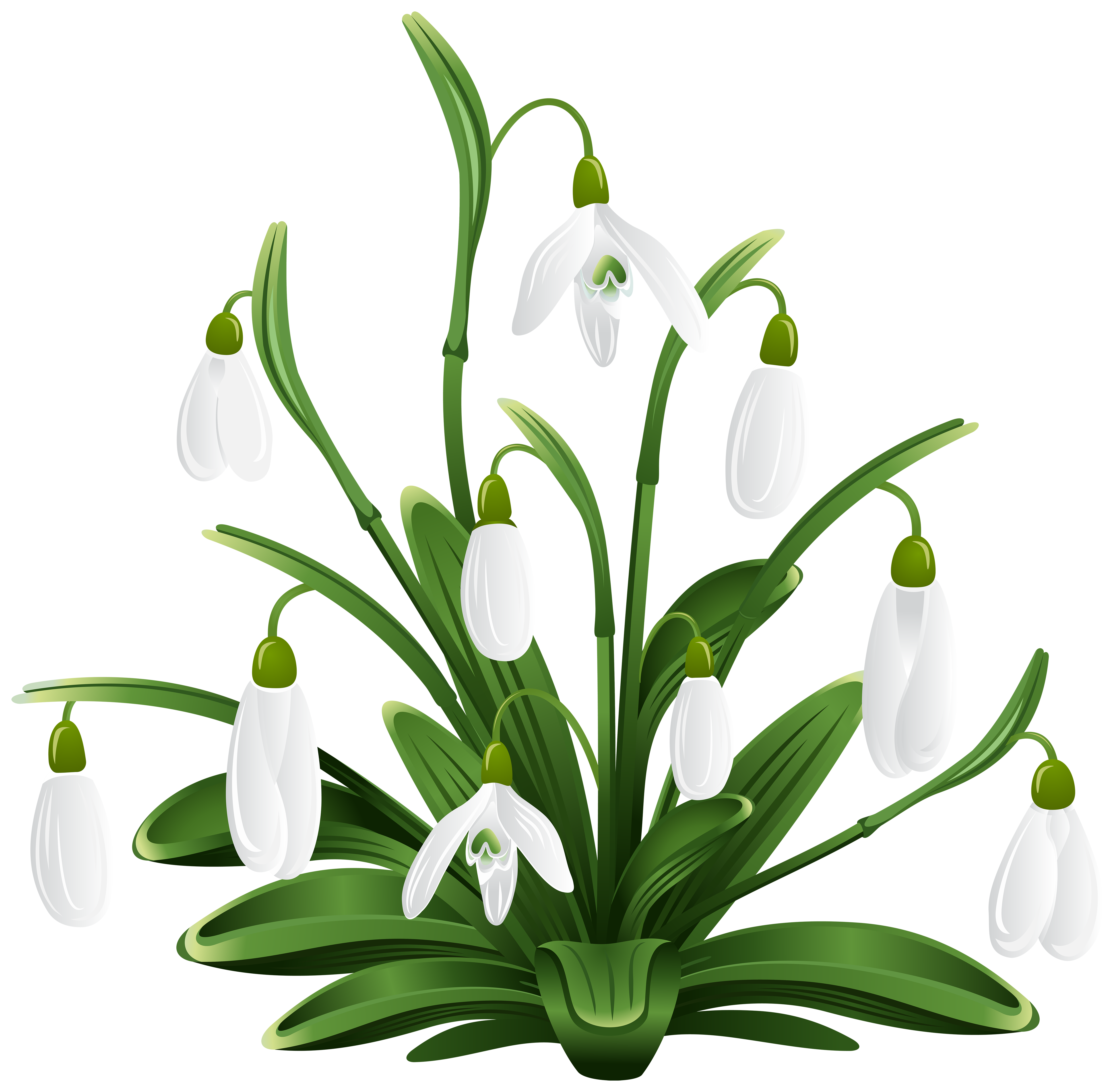 Snowdrops Transparent Png Clip Art Image Free Download Pencil Drawings Of Flowers Spring Art Flower Silhouette