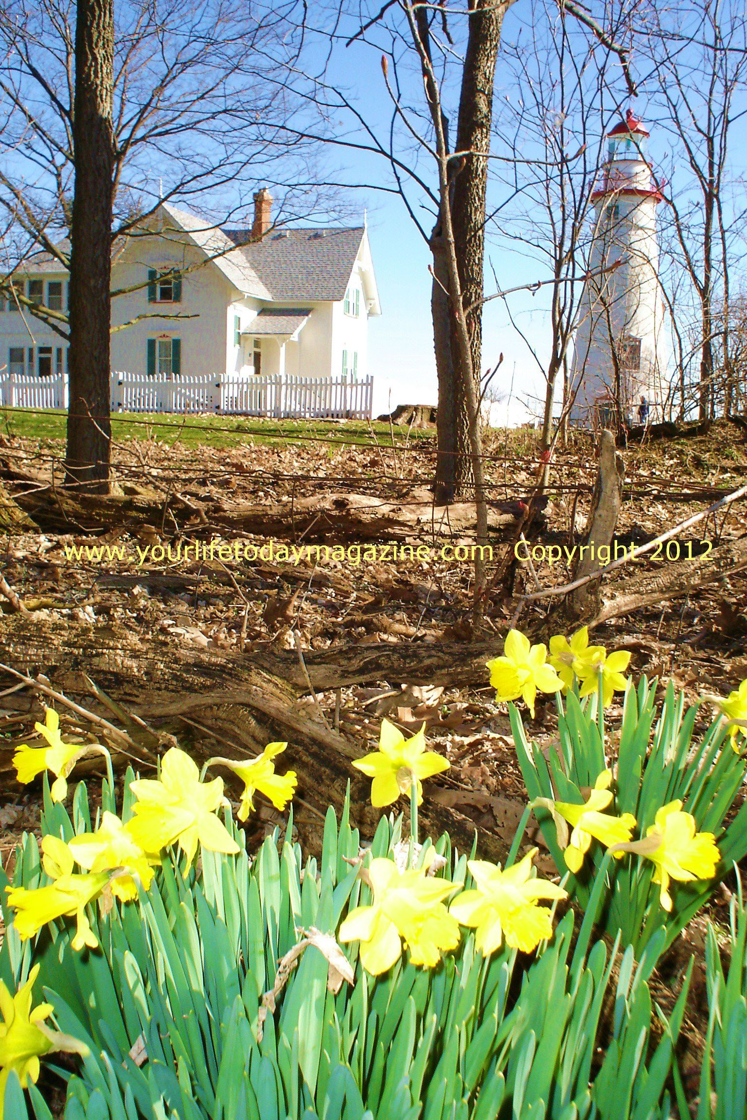When I passed my freezing daffodil buds this morning, I thought ...