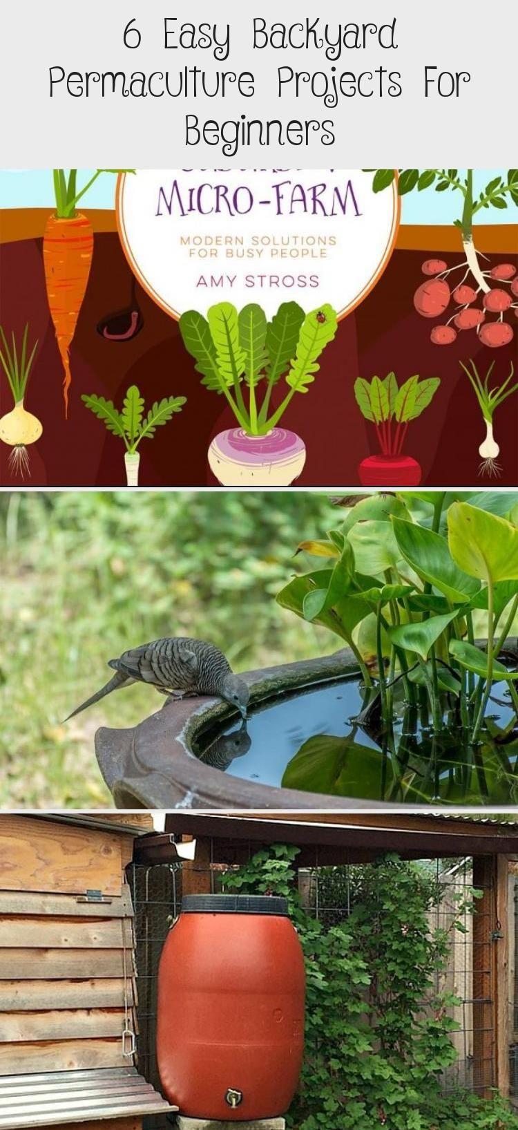 My Blog   Easy backyard, Permaculture, Vegetable garden diy