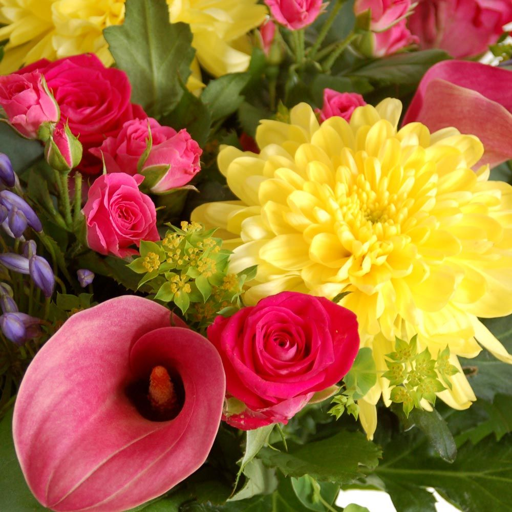 Flower delivery online florist send flowers online moonpig flower delivery online florist send flowers online moonpig izmirmasajfo