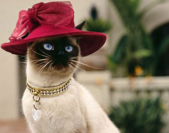 Wine Red Hat With Large Bow | Things I love | Cat hat ...