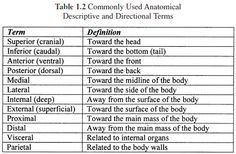 Anatomical Directional Terms – nanoprom.info