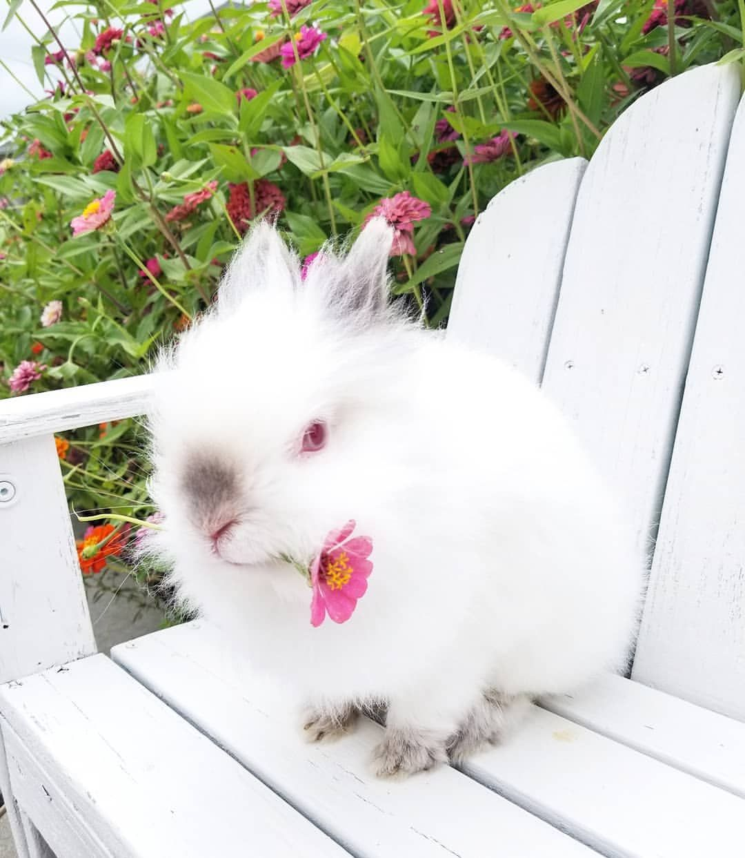 Pin by Ruby on Zinnia Cottage Happy day farm, Cute bunny