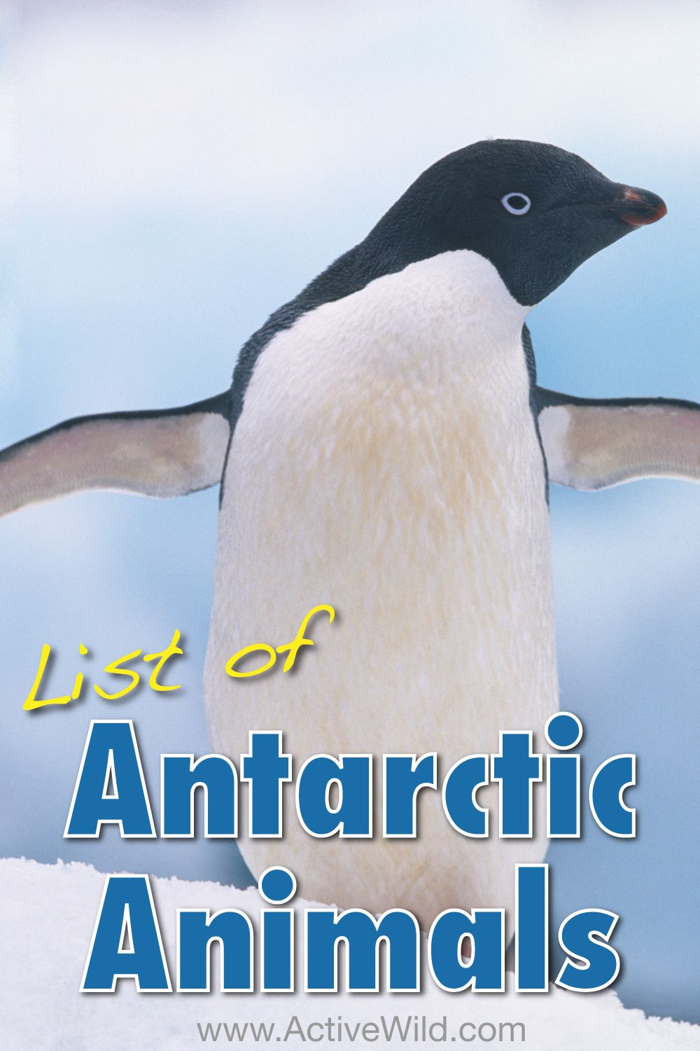 Antarctic Animals List With Pictures, Facts & Information