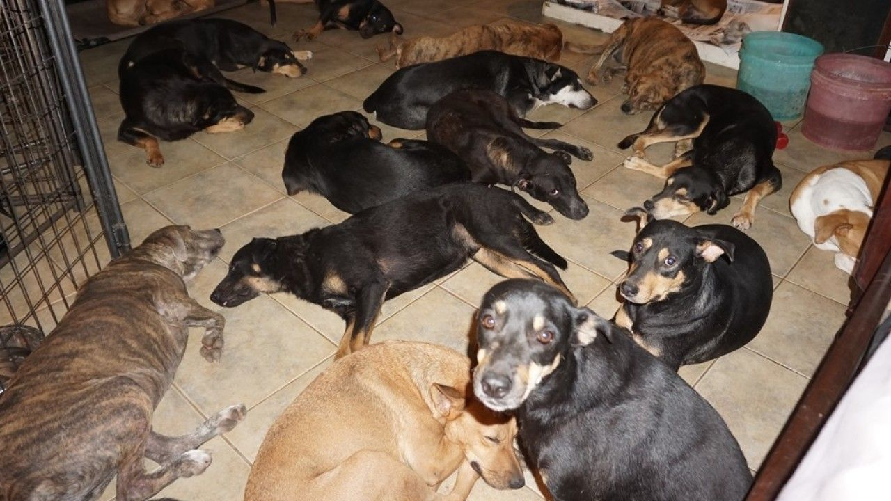 Woman in Bahamas brings 97 dogs into home to protect them