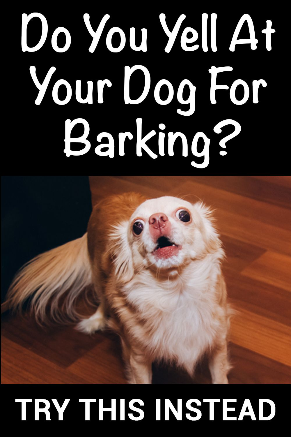 Do You Yell At Your Dog For Barking?