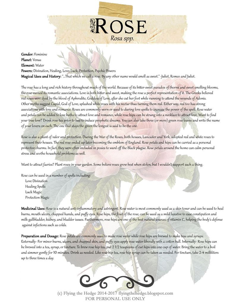 Magical and Medicinal uses of Rose. Free BOS page!