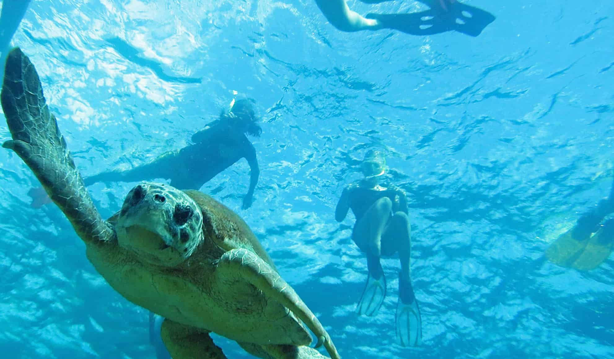 Marine Biology Careers Marine biology, Marine biology