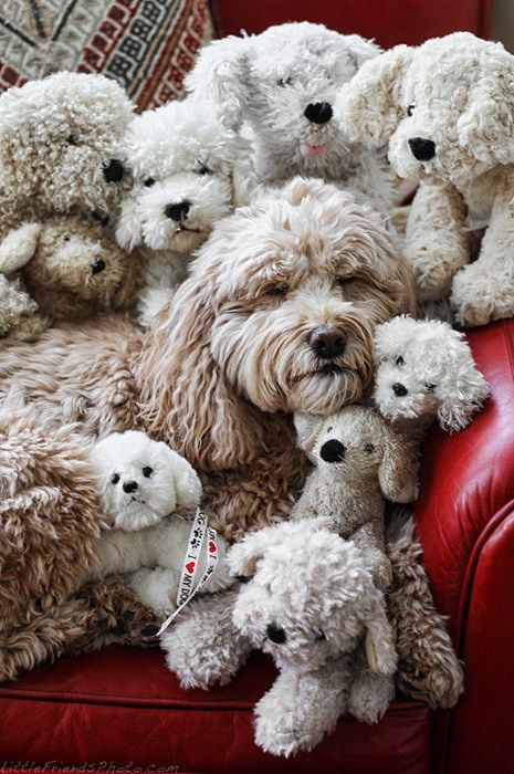 Adorable Cute Dogs Dog Photography