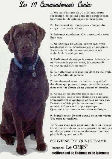 Poeme Pour Mon Chat Que J'aime : poeme, j'aime, 86437287_o, Toilettage, Canin,, Chien, Enfant,, Chiens, Chiots