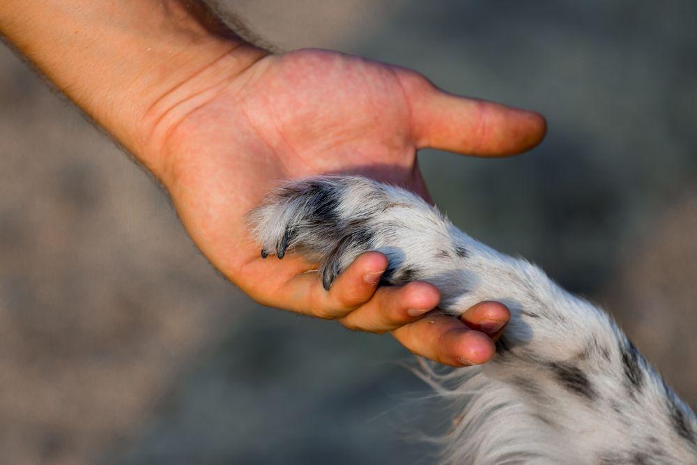 10 Handy Hand Signals For Deaf Dogs Deaf Dog Dog Breeds Dogs