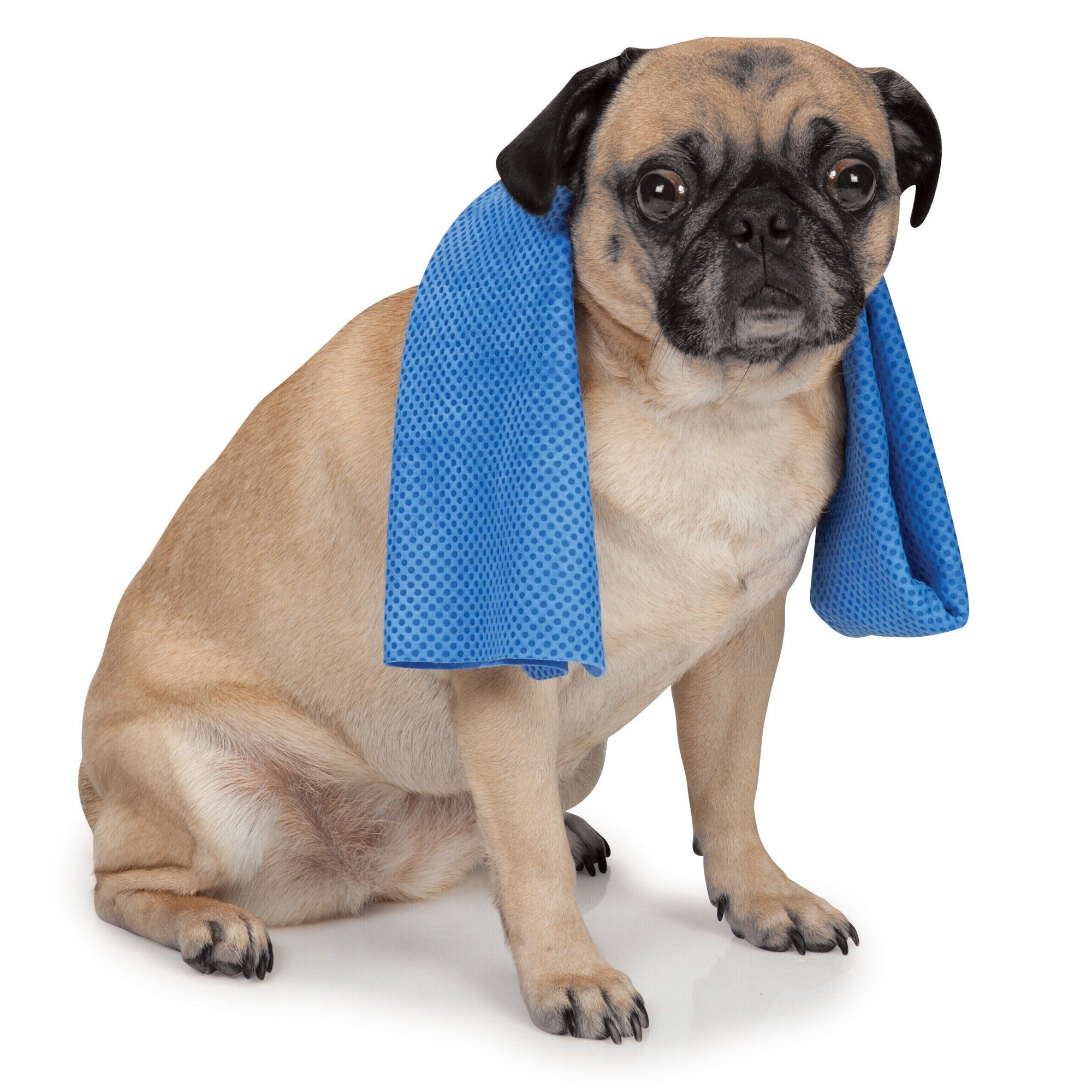 Cool Pup Dog Cooling Pet Towel Want To Know More Click On The