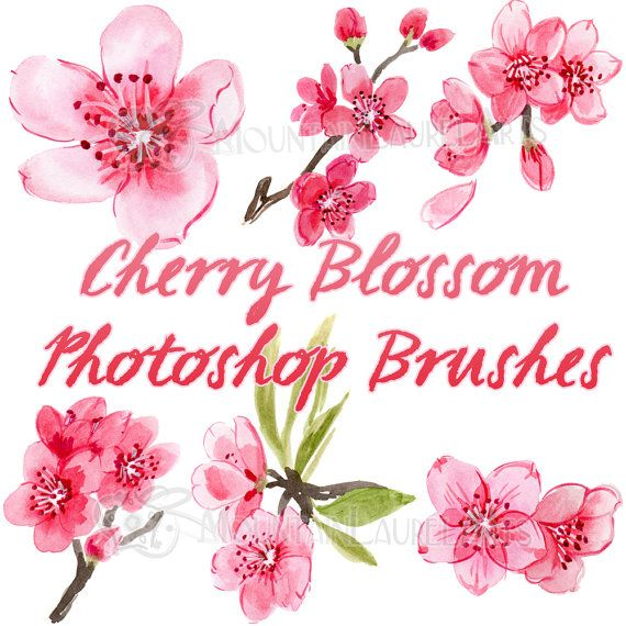 Cherry Blossom Watercolor Painting Photoshop Brush Set