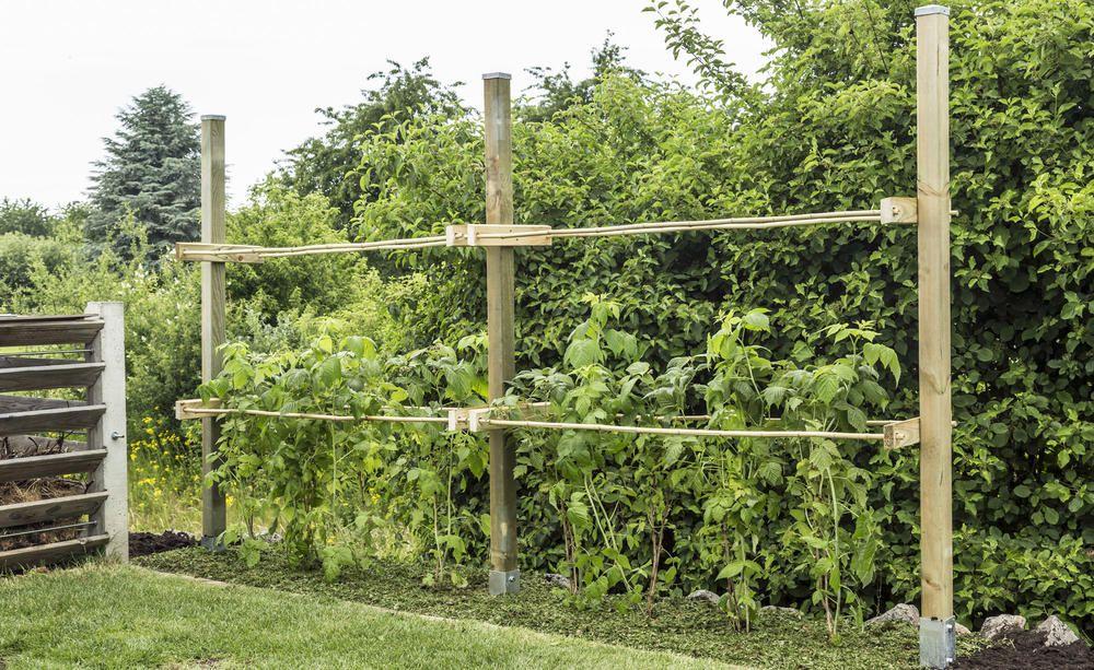 Rankhilfe Fur Himbeeren Selber Bauen Rankhilfe Himbeeren Pflege Himbeeren Pflanzen