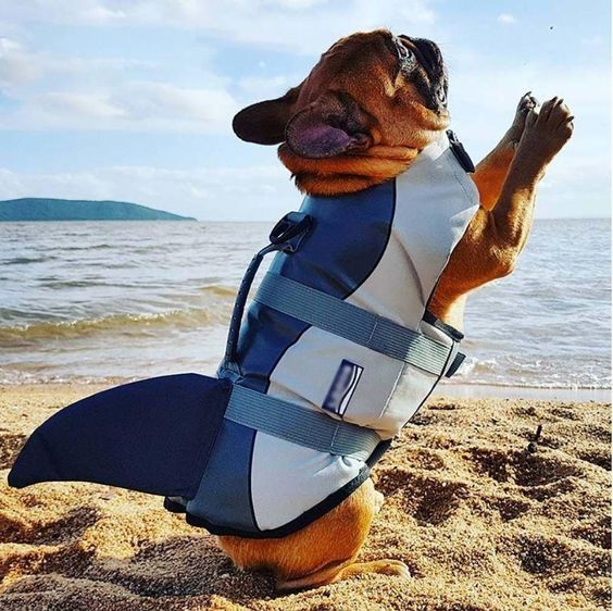 What To Consider When Buying A Life Jacket For Your Dog Dog Safety Dog Life Dogs