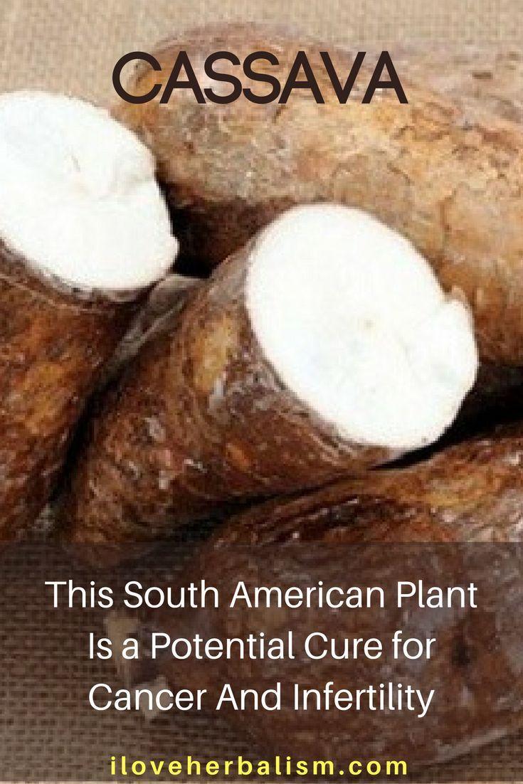 Health benefits of cassava - Plants