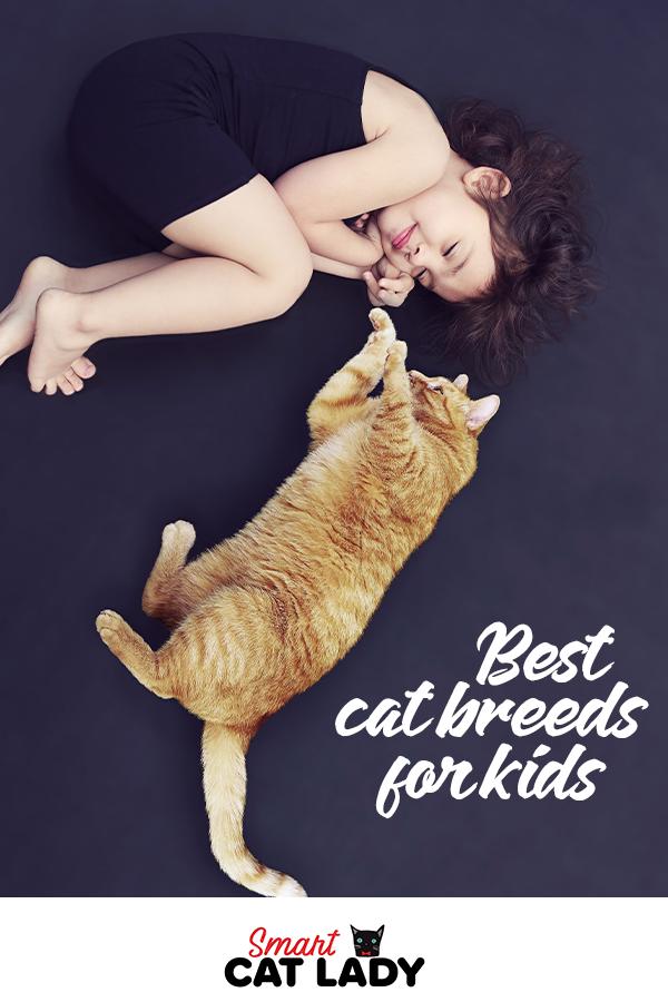 Best Cat Breeds For Kids Best cat breeds, Cat breeds