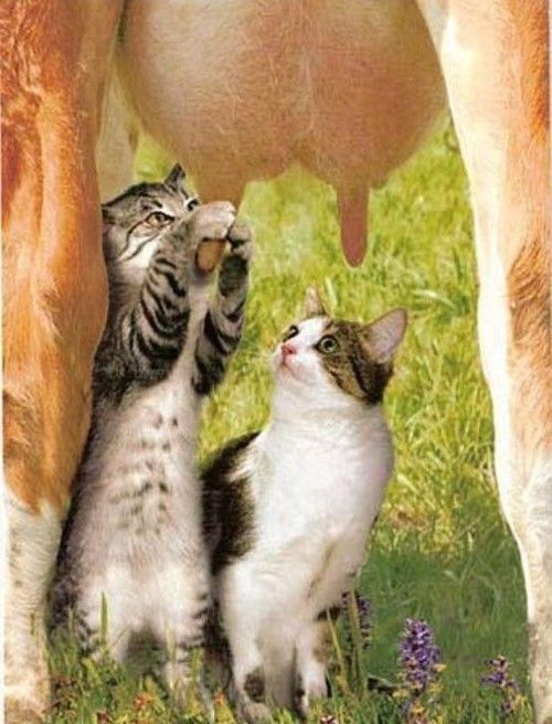 Naturalism? Is very complicated … Pets Pinterest