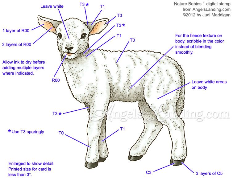 Copic Coloring Guide: Lamb from Nature Babies 1 by Crafts - Cards ...