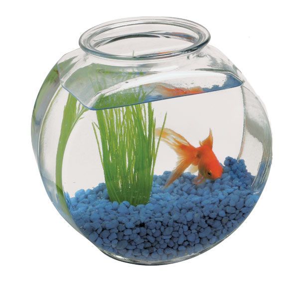 Fish bowl decorations google search reference for fish for How to make a fish bowl